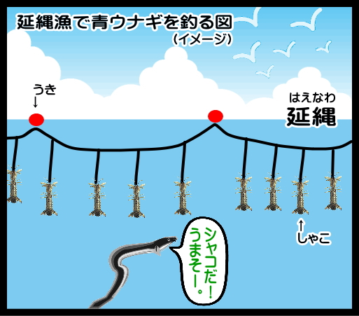 児島湾 天然岡山シャコ青鰻